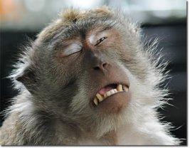 Funny-Crying-Face-Monkey-Image